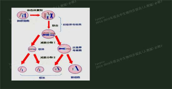 老师,能发一份关于精子卵子形成过程的详细_高